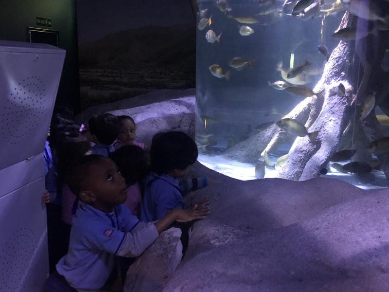 British Nursery School in Sharjah
